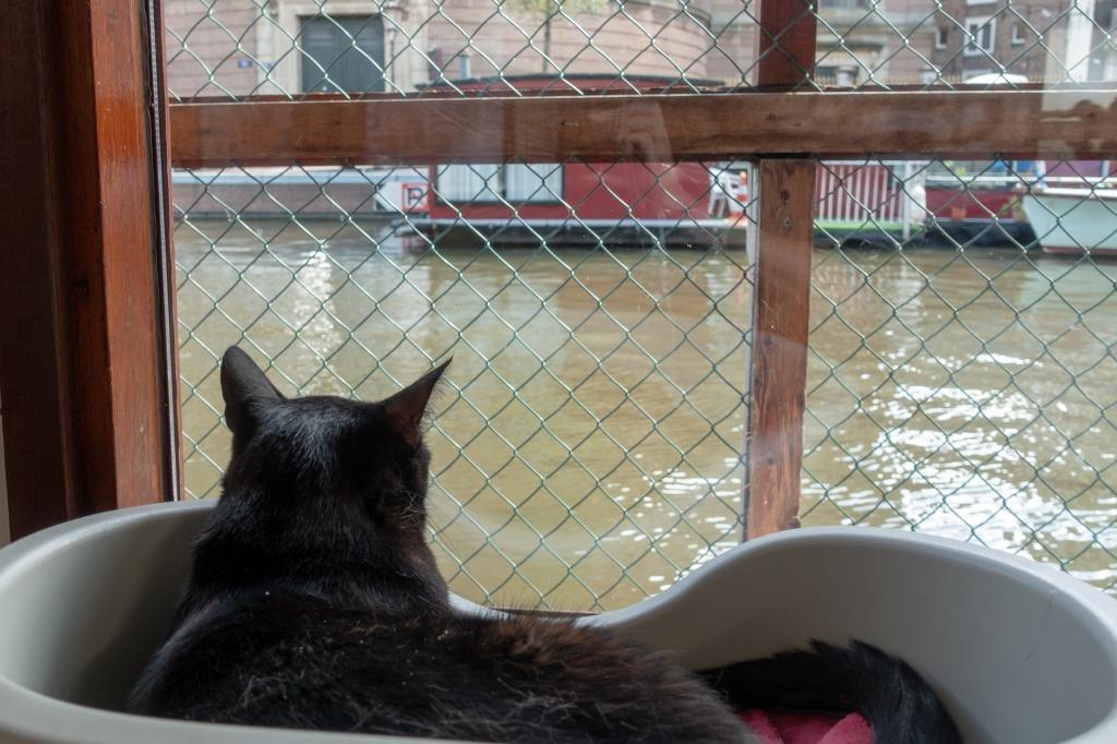 Poezenboot, cat boat Amsterdam